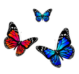 Three butterflies of blue and orange colors