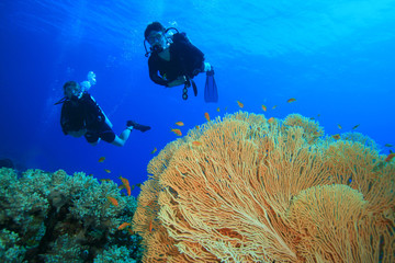 Couple scuba diving on a coral reef