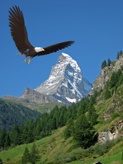 Fototapete - american bald eagle blue sky montain