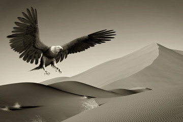 Fototapete - american bald eagle desert huntting old