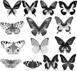 fourteen grey butterflies