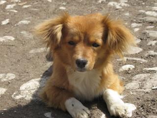 Cute dirty stray dog