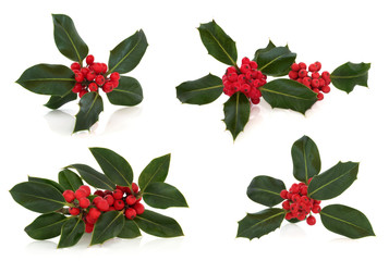 Holly Leaf and Berry Sprigs