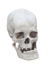 real male skull