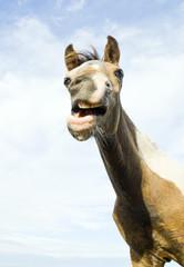 Young foal smiling towards camera.