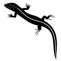 Silhouette of lizard