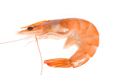 single shrimp