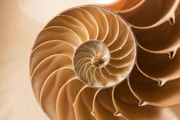 Fototapeta close up nautilus shell pattern obraz