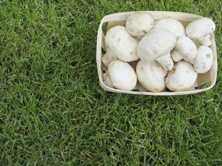 Mashrooms in a basket on a grass