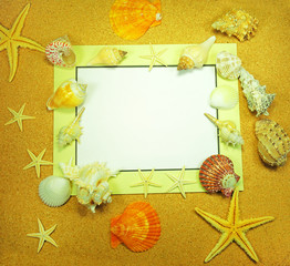 Sea frame with starfishes and shell