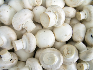 champignons background