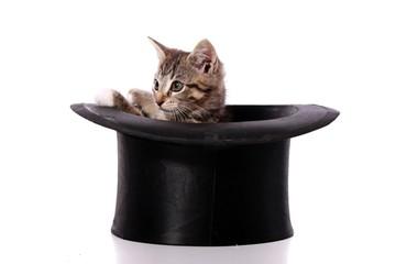 kleine Katze schaut aus dem schwarzen Hut
