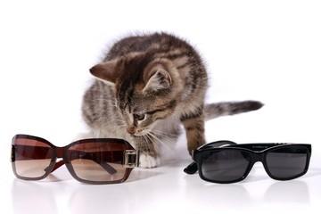 kleine Katze sucht sich Sonnenbrille aus