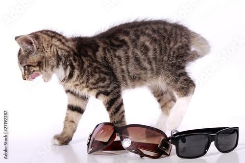 kleine katze und sonnenbrille stockfotos und lizenzfreie bilder auf bild 27192287. Black Bedroom Furniture Sets. Home Design Ideas