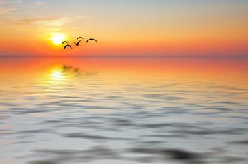 las aves y el sol