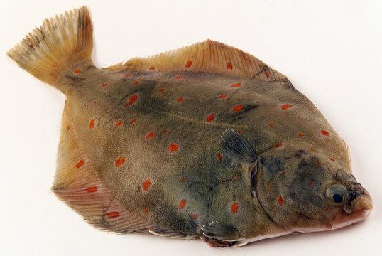 poisson plie