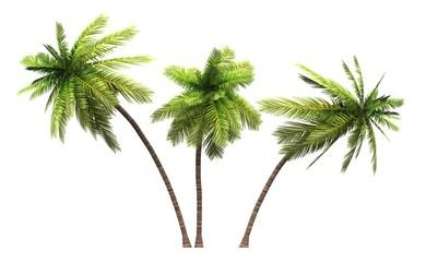 3x 3D Kokosnusspalmen freigestellt