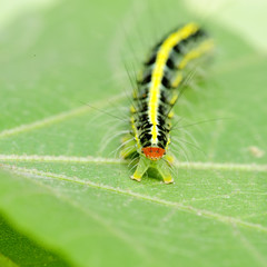 a cute caterpillar on leaf