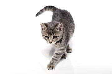 Kleine Katze schleicht