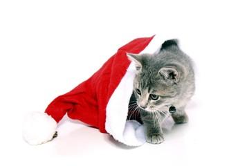Kleine Katze schaut aus der Nicolausmütze