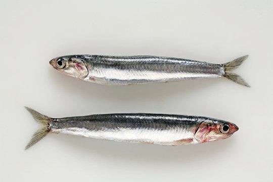 Deux anchois