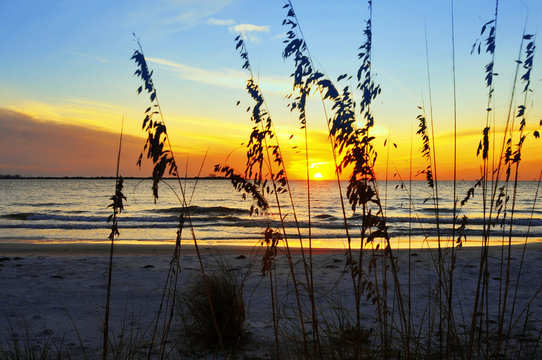 Sunset with sea Oats in the front
