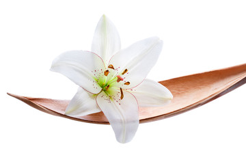 Lily flower on a coco leaf, isolated on white
