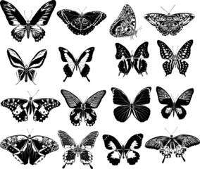 sixteen black butterflies
