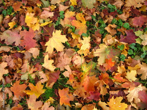 Herbst Hintergrund Stock Photo And Royalty Free Images On Fotolia