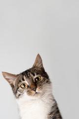 Asking cat