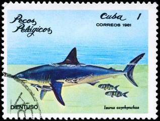 CUBA - CIRCA 1981 Shark