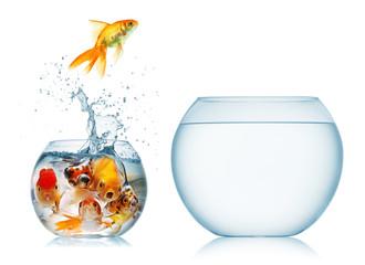 gold fish and piranha
