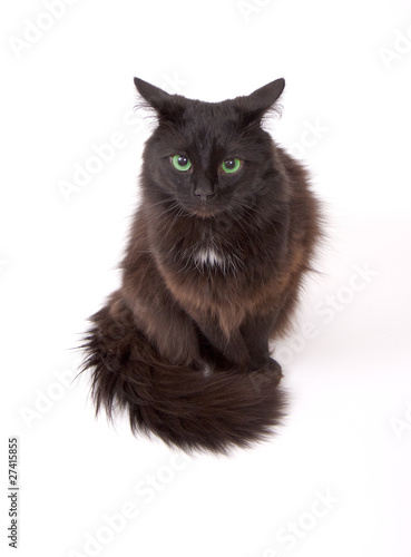 """""""Angry black cat with beautiful green eyes isolated on ..."""