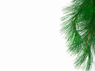 The branch of a christmas tree on white background