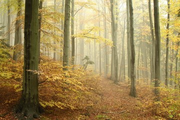 Keuken foto achterwand Bos in mist Path in misty autumn forest in a nature reserve