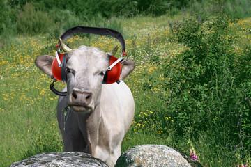 Vache avec Casque Audio