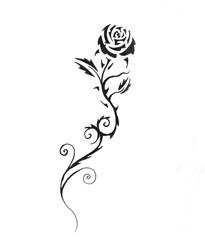 Sketch of tattoo art, black rose