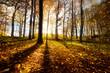 Herbstlicher Wald im Gegenlicht