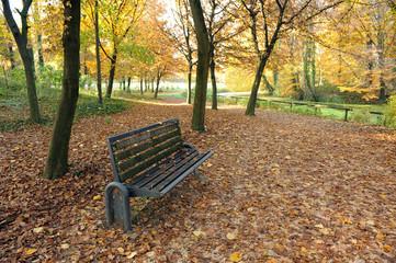 autunno alberi 1478