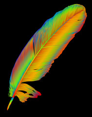 single rainbow feather on black