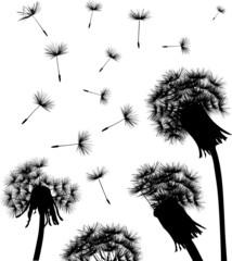 dandelion field silhouette