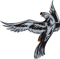 Eagle with dark blue plumage. Predatory birds.
