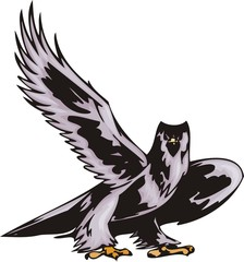 Big northern sea eagle.