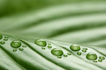 Footprint water drops on leaf