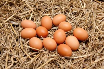 Hühnereier im Stroh