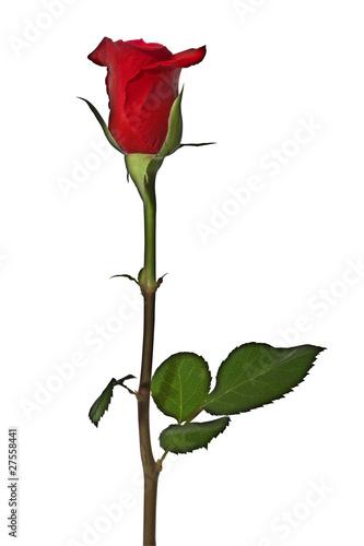 rote rose stockfotos und lizenzfreie bilder auf bild 27558441. Black Bedroom Furniture Sets. Home Design Ideas