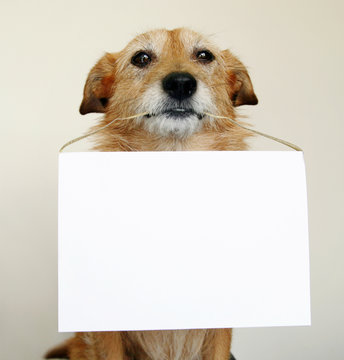 Dog with blank sign
