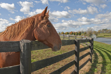 Beautiful bay horse behind farm fence surrounded by sky.