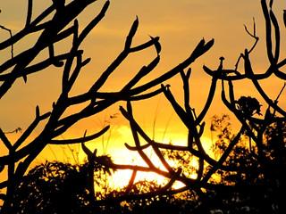 sunset behind branch