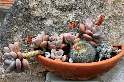 Composizione di piante grasse immagini e fotografie - Composizione piante grasse giardino ...